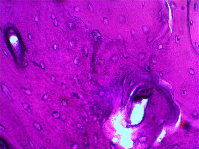 Mikroskopická sada preparátů Levenhuk N20 NG